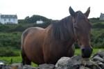 Ireland Aran Islands dark horse