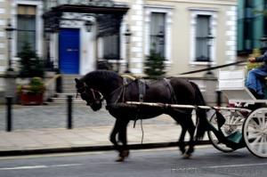 Ireland dublin horse and buggy