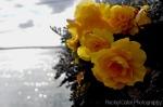 Ireland flowers titanic last port