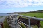 Happy Donkey Aran Islands Ireland
