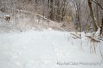Toronto Park After Snow Storm