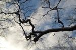 Toronto sky and tree
