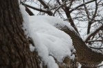 Toronto snow covered branches