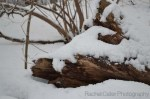 Toronto Snowy log