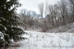 Toronto snowy trees