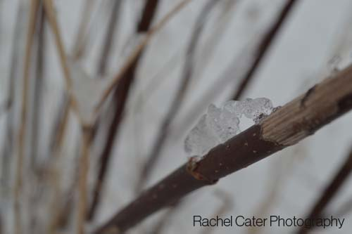 icy stem