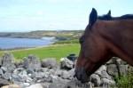 Ireland Aran Islands view from horse
