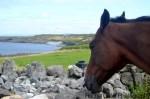 Ireland Aran Islands view from horse