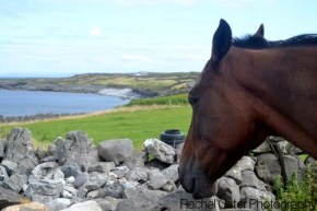 view from horse aran islands