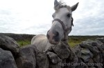 Ireland Arand Islands White Horse