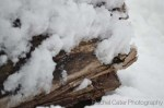 Toronto Snow on Log