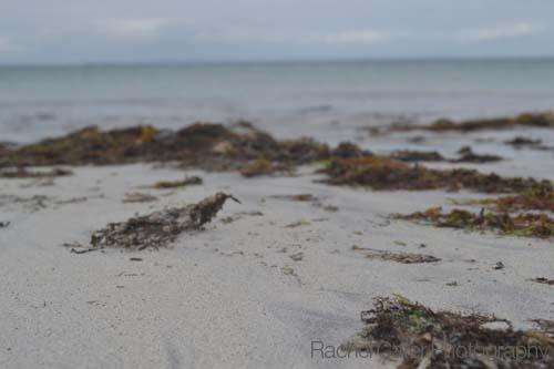 Sandy Beach with Seaweed