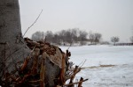 Toronto Beach Tree and Icy Pond