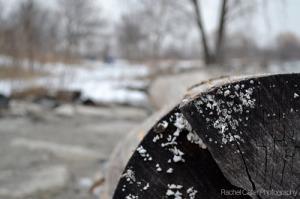 Toronto photo of snowy log at beach