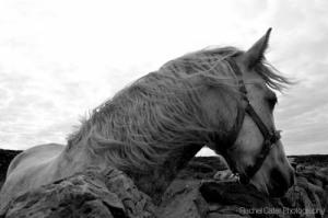 Aran Islands Ireland White horse