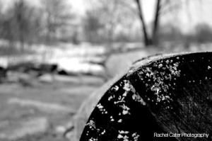 BW Photo of Icy Log at Toronto Beach