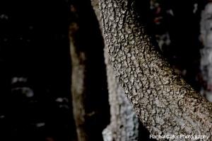 Colour Photo of Tree Branches in Toronto Ontario