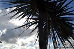 Dublin Titantic Last Port Palm Tree