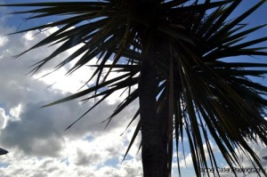 Creating Memories with Travel & Photography Palm Tree at the Titantic Last Port in Ireland