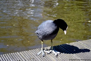 Bird on dock on Amsterdam Rachel Cater Photography