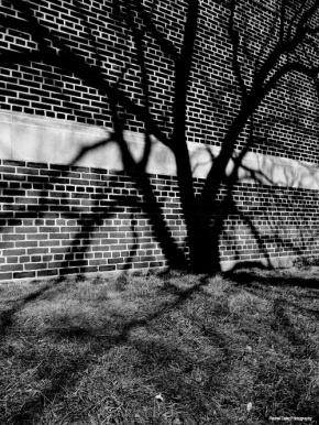 Black and White Potography Shadow series shadow of tree on brick building in Toronto