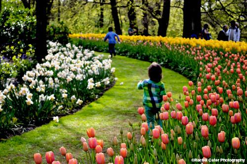 Children running through tulips Rachel Cater Photography
