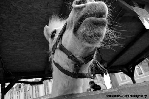 Easter Festival Prague braying donkey Rachel Cater Photography