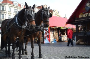 Prague Square Horse Drawn Carriage Rachel Cater Photography