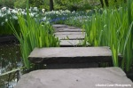 Stone Path over Water_Tulip Festival in Noordoostpolder_Rachel Cater Photography