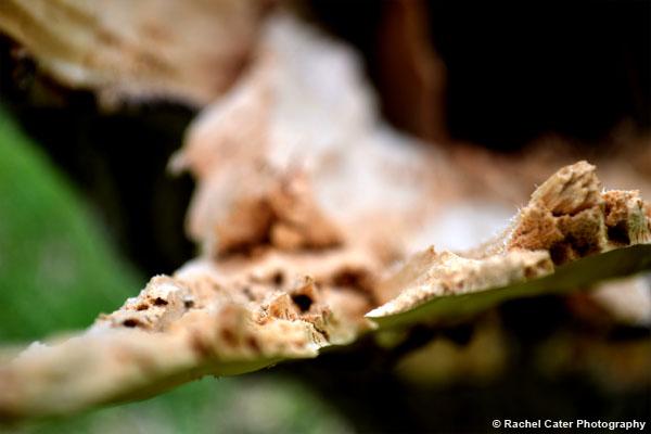 Broken Wood on a tree Rachel Cater Photography