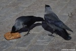 Close up of Birds in Stockholm Eating Bread Rachel Cater Photography