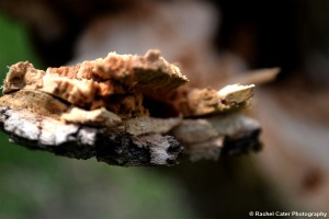 Close up of Splintered wood on a tree Rachel Cater Photography