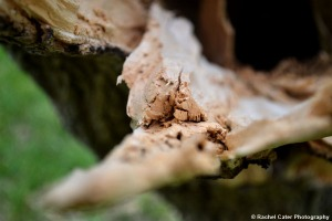 Close up of splintered wood Rachel Cater Photography