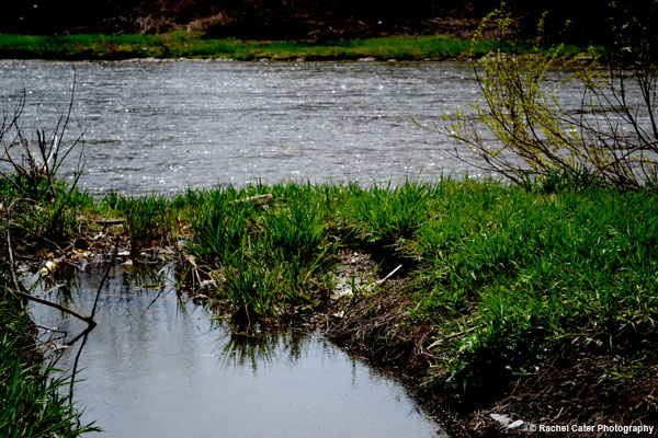 Humber River in Toronto Rachel Cater Photography
