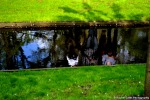 Reflections in a creek Rachel Cater Photography