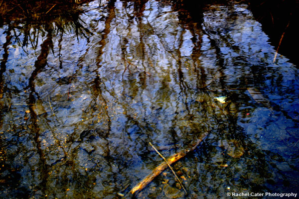 Reflections in Water Rachel Cater Photography