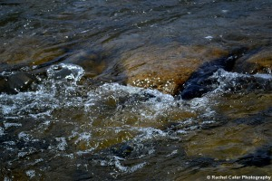 ripple in water in creek Rachel Cater Photography
