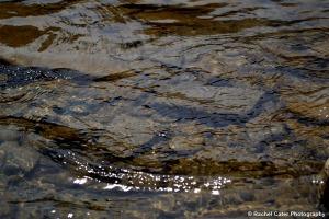 Rocks in a creek Rachel Cater Photography