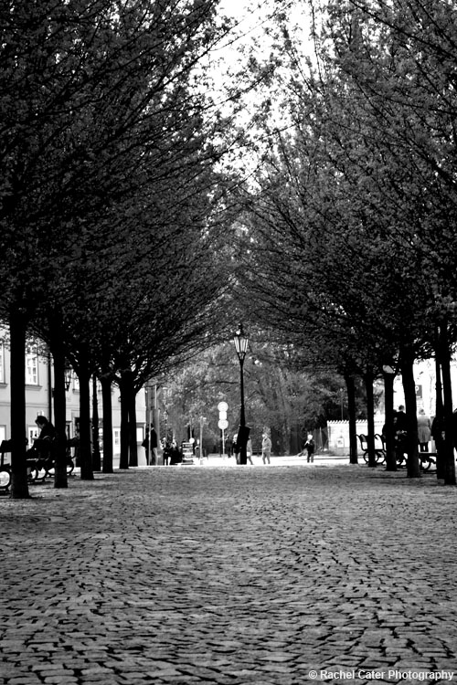 Row of trees Prague Rachel Cater Photography