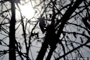 Silhouttte of Tree Rachel Cater Photography