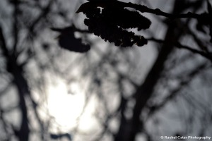 Silhouttte Tree Rachel Cater Photography