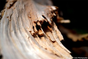Splintered wood on a tree Rachel Cater Photography