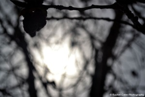 Tree Silhouette Rachel Cater Photography