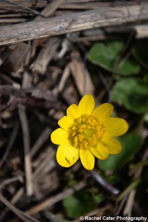 Vibrant Yellow Flower in Toronto Rachel Cater Photography