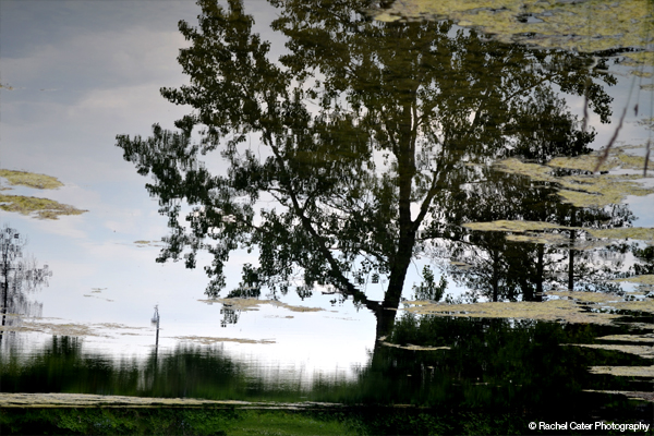Reflection of Tree in Pond Rachel Cater Photography