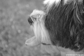 Scamp Profile Rachel Cater Photography