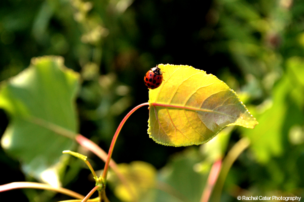 adventurous  ladybug Rachel Cater Photography