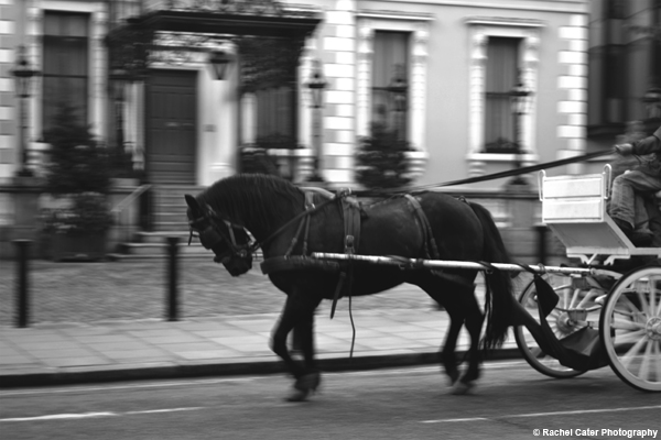 Horse and Buggy in Dublin Rachel Cater Photography
