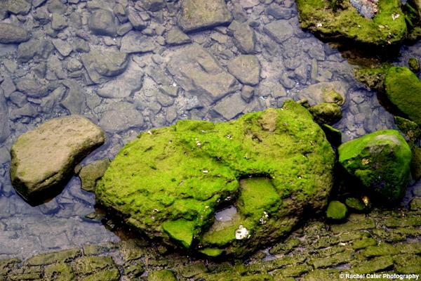 Moss on a rock Rachel Cater Photography