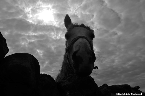 Silhouette of Horse in Ireland Rachel Cater Photography